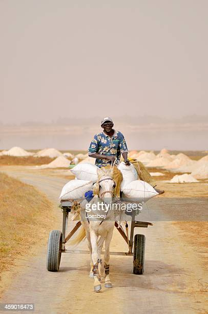Senegalese Man Driving Horse And Buggy