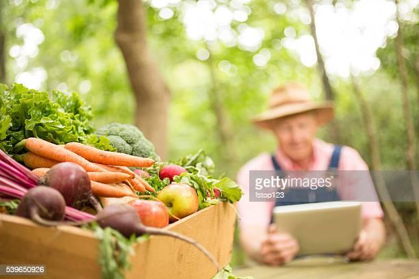 Senior adult, male farmer harvests organic vegetables.  Digital tablet.