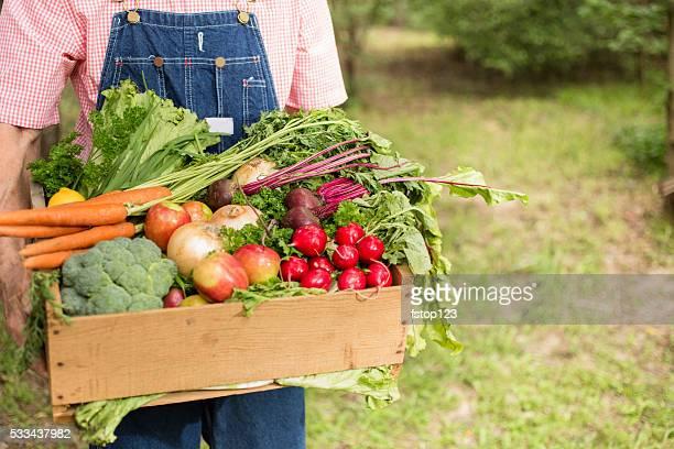 Senior adult, male farmer harvests organic vegetables.