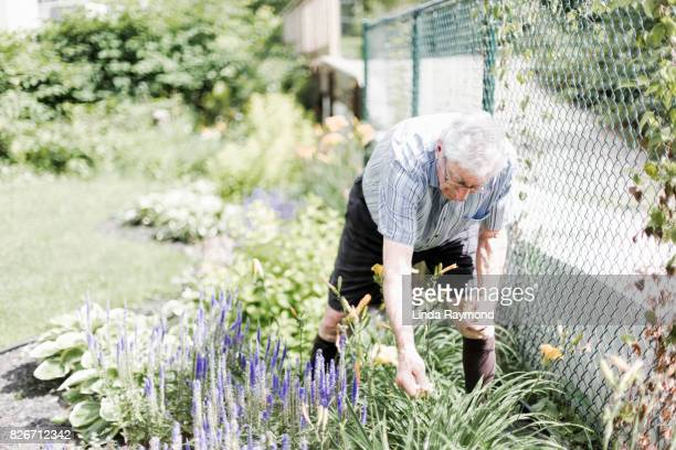senior adult man doing yardwork - white hair stock photos and pictures