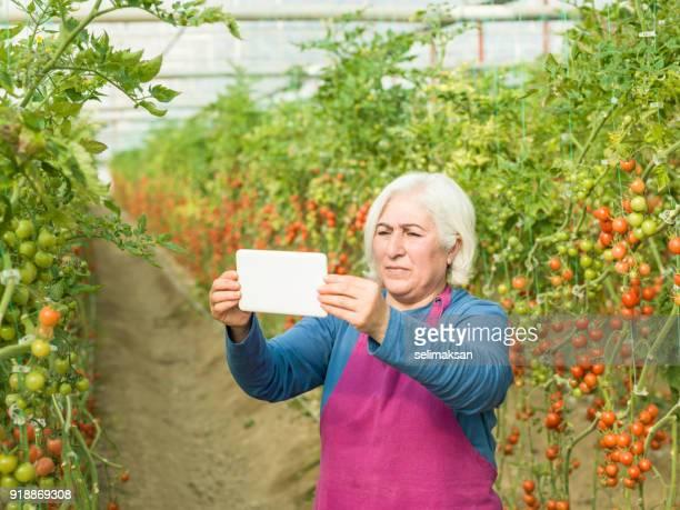 Senior Adult Woman Vlogging In Modern Tomato Greenhouse