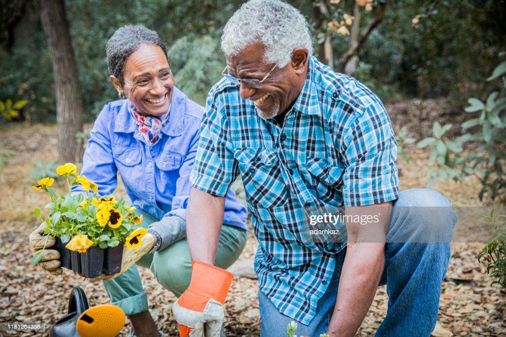Senior African American Couple Planting in Garden : Stock Photo