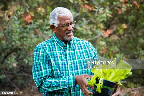 Senior African American Man Planting in the Garden