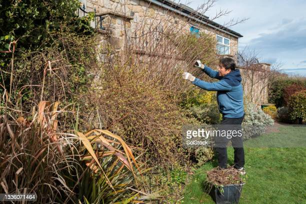 senior asian man gardening at home - one senior man only stock pictures, royalty-free photos & images
