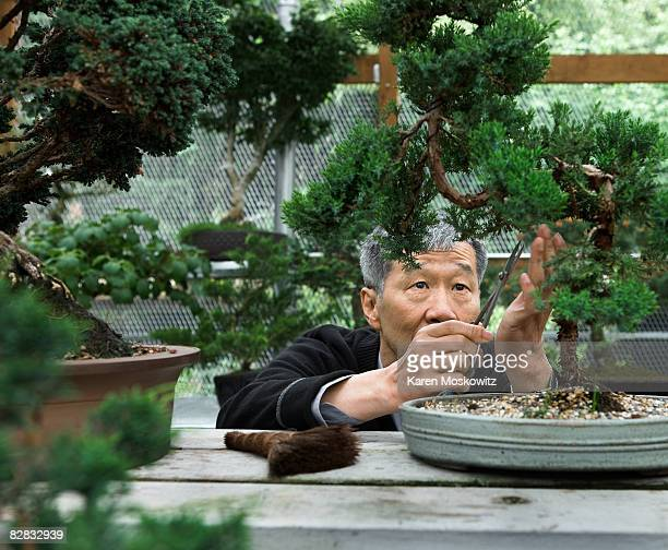 Senior asian man trimming bonsai tree