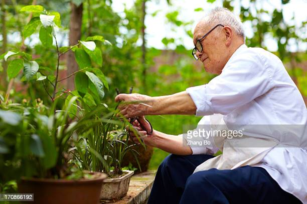 senior asian man working gardening - rolled up sleeves stock photos and pictures
