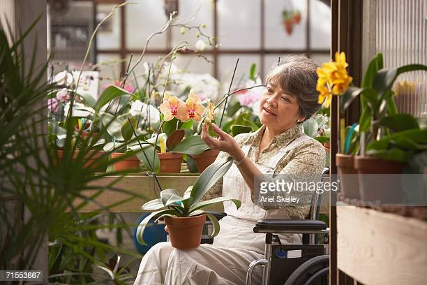 Senior Asian woman in wheelchair in greenhouse