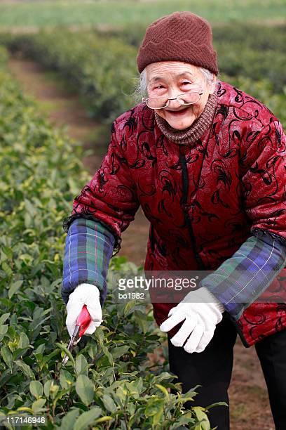 senior asian woman working in the garden