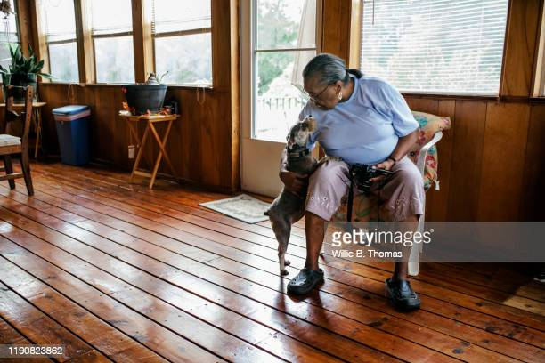 senior black woman patting the family dog - black shoe stock pictures, royalty-free photos & images