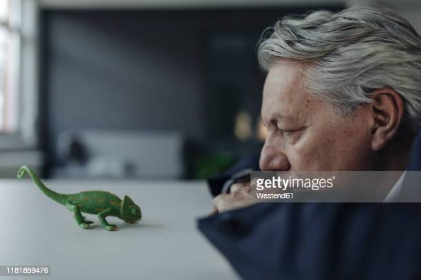 senior businessman looking at toy chameleon - veränderung stock-fotos und bilder