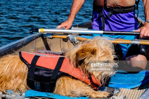 senior canoeist and his old wet dog - murray mccomb stock pictures, royalty-free photos & images