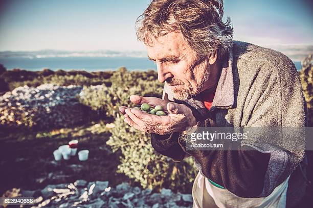 Senior Caucasian Man with Handful of Olives, Brac, Croatia, Europe