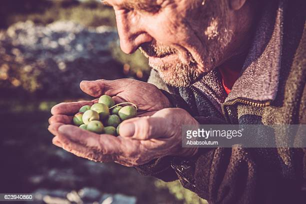 senior caucasian man with handful of olives, brac, croatia, europe - aceitunas fotografías e imágenes de stock