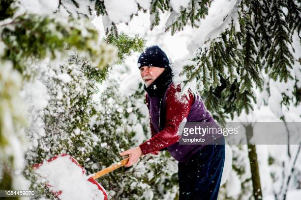 senior cleaning  snow from trees after massive snowfall - snow shovel stock photos and pictures