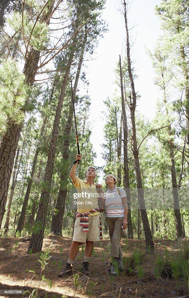 Senior Couple Hiking Through Woodland : Stock Photo