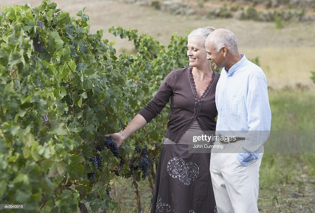 Senior Couple Looking at a Bunch of Grapes in a Vineyard : Stock Photo