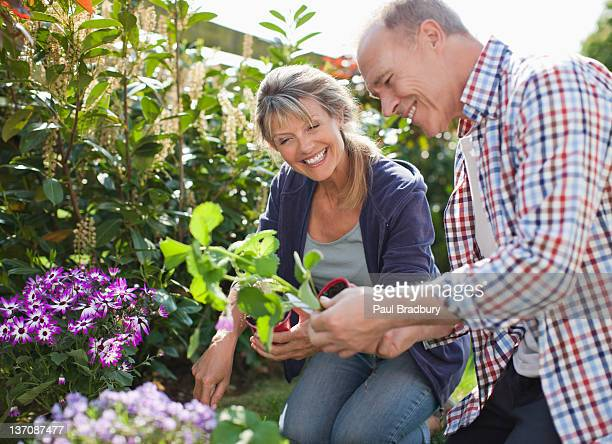 Senior couple planting in garden