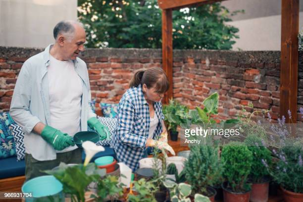 Senior couple repotting plants