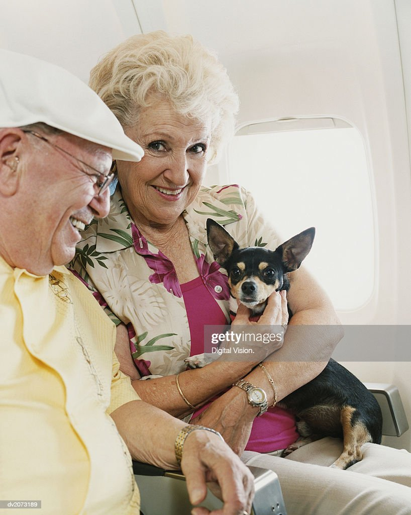 Senior Couple Sitting on a Plane, with the Woman Holding a Small Dog : Stock Photo