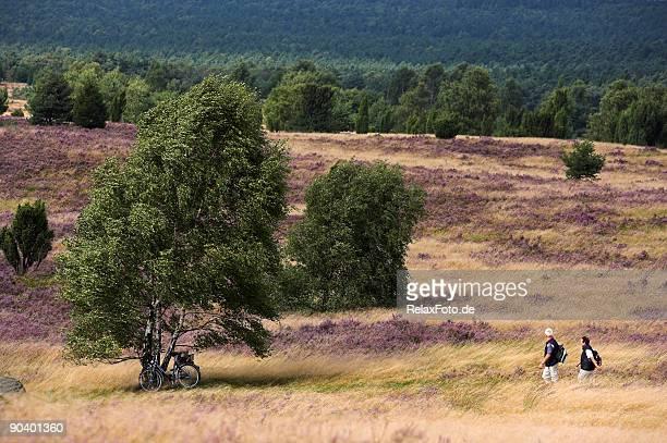 senior couple walking on beautiful heathland (xxl) - lüneburg stock pictures, royalty-free photos & images