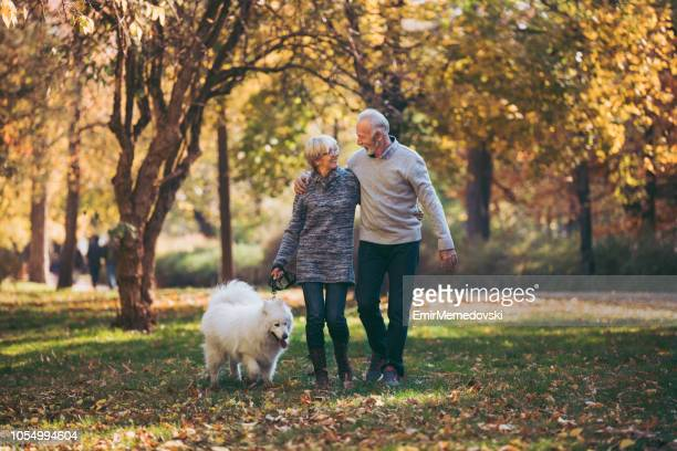senior couple walking their dog in park - autumn dog stock pictures, royalty-free photos & images