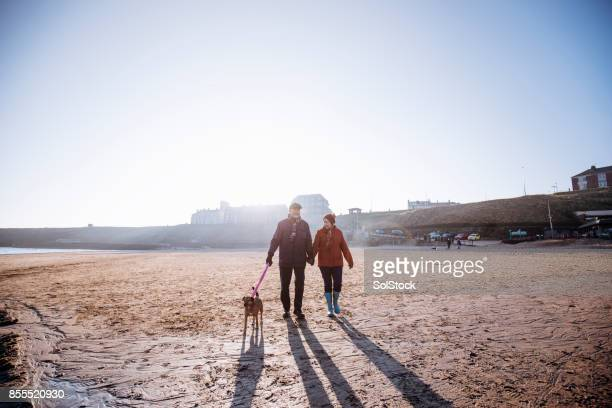 senior couple walking their dog on the beach - close to stock pictures, royalty-free photos & images