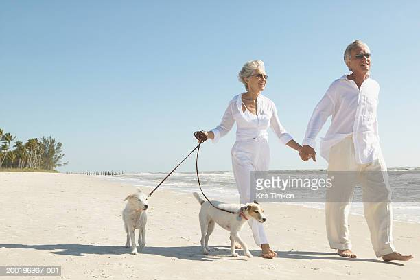 Senior couple walking two Jack Russell terriers on beach, smiling