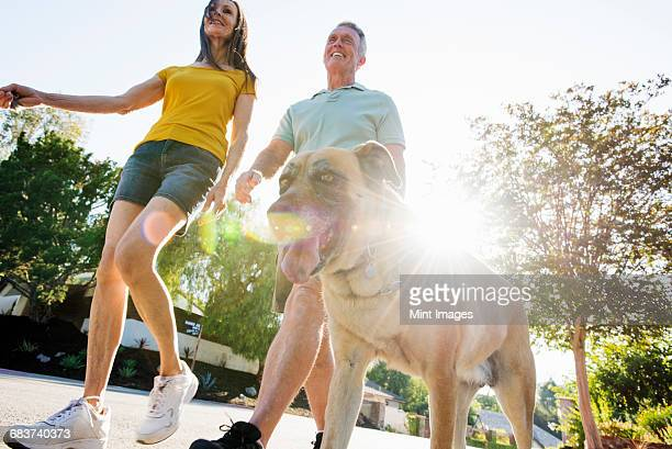 Senior couple wearing shorts walking their dog along a street in the sunshine.