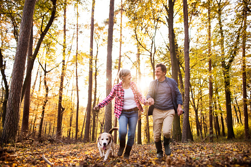 Senior couple with dog on a walk in an autumn forest. 1020524218