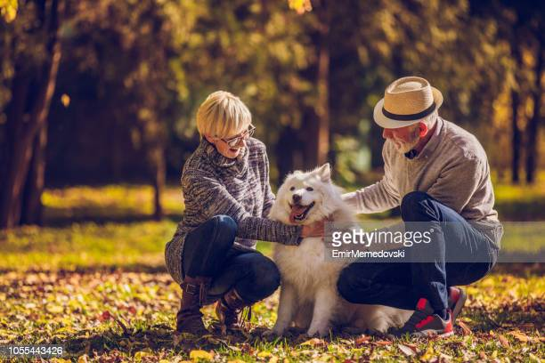 senior couple with their dog in park - monogamous animal behavior stock photos and pictures