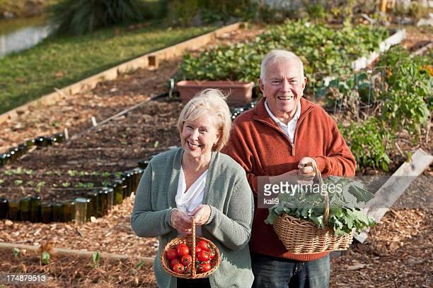 Altes Paar mit Gemüse geerntet vom Garten