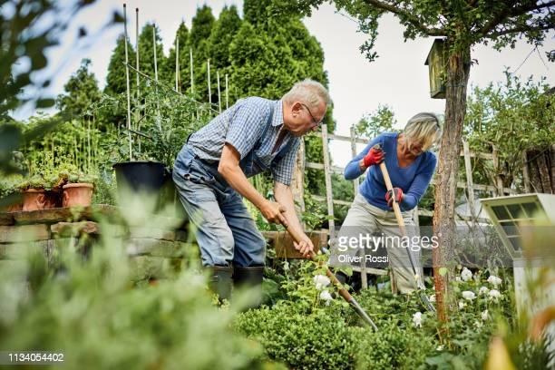senior couple working in garden together - garten stock-fotos und bilder