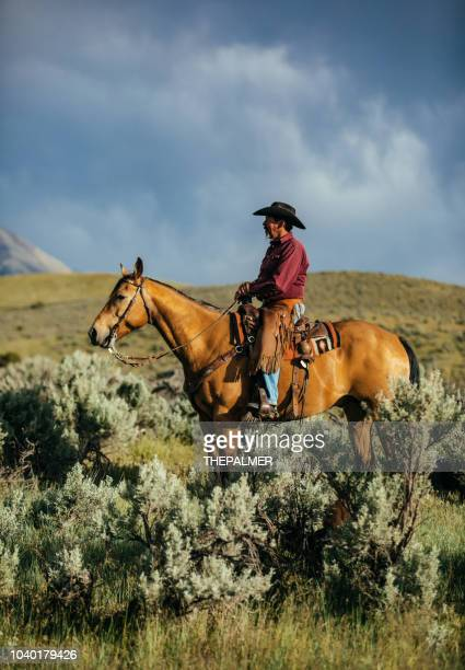 senior cowboy horseback riding - american animals film stock photos and pictures