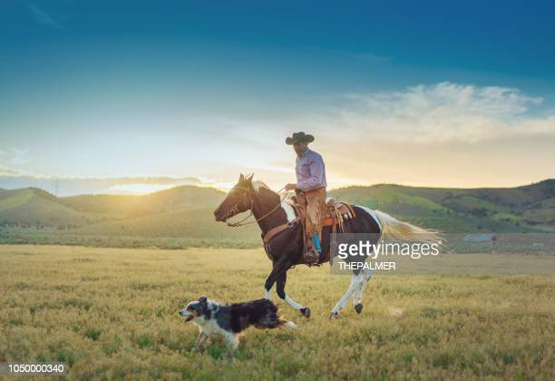 senior cowboy horseback riding - horses running stock pictures, royalty-free photos & images