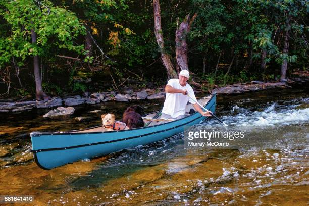 senior demonstrating superb whitewater paddling skills to the delight of his old dogs - murray mccomb stock pictures, royalty-free photos & images