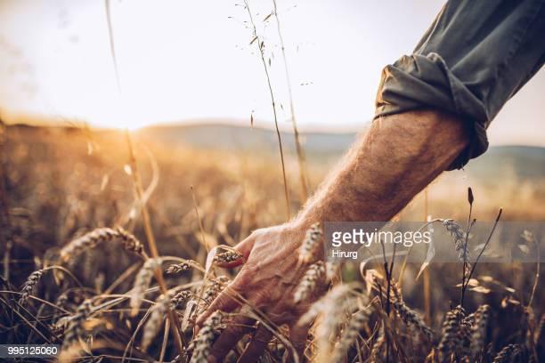 Senior farm worker