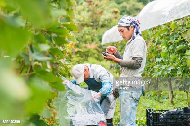 senior bauer und sein enkel gemeinsam in ihrem weinberg - landwirtschaftliche tätigkeit stock-fotos und bilder