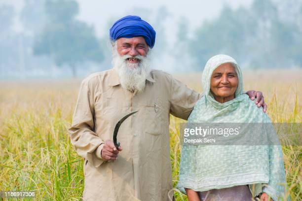 senior farmer couple on agricultural field stock photo - punjab - india stock pictures, royalty-free photos & images