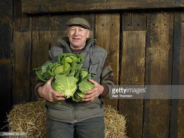 senior farmer holding armful of cabbages, smiling, portrait - farmer stock pictures, royalty-free photos & images