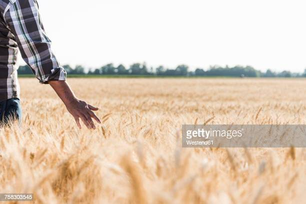 Senior farmer in a wheat field, partial view