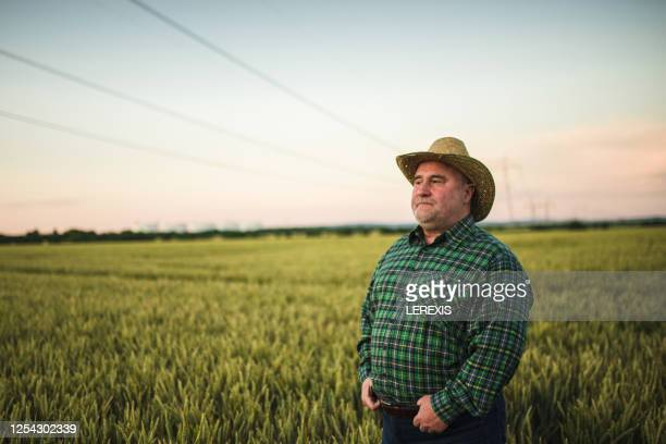 senior farmer in a wheat field - farmer stock pictures, royalty-free photos & images