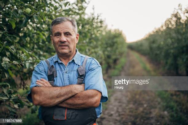 senior farmer in orchard - one senior man only stock pictures, royalty-free photos & images