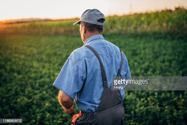 senior farmer - agricultural activity stock pictures, royalty-free photos & images
