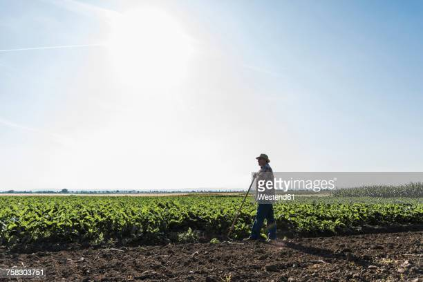 Senior farmer standing in front of a field