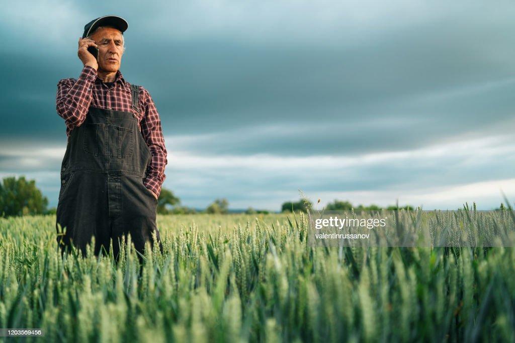 Senior farmer talking on smart phone in field : Stock Photo