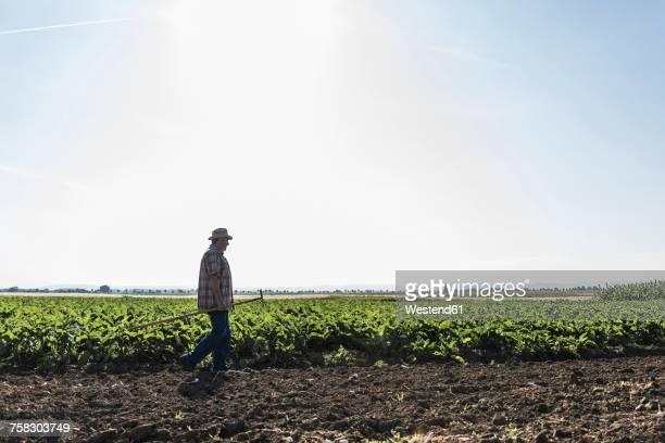 Senior farmer walking in front of a field