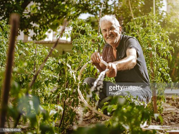senior farmer watering in the garden - turkey middle east stock pictures, royalty-free photos & images