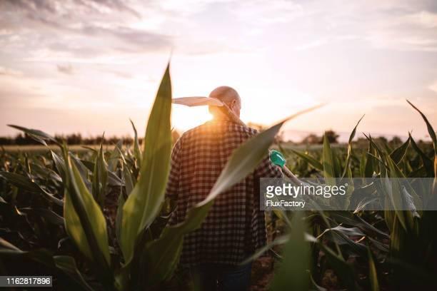 トウモロコシ畑で働くシャベルを持つシニア農家 - プランテーション ストックフォトと画像