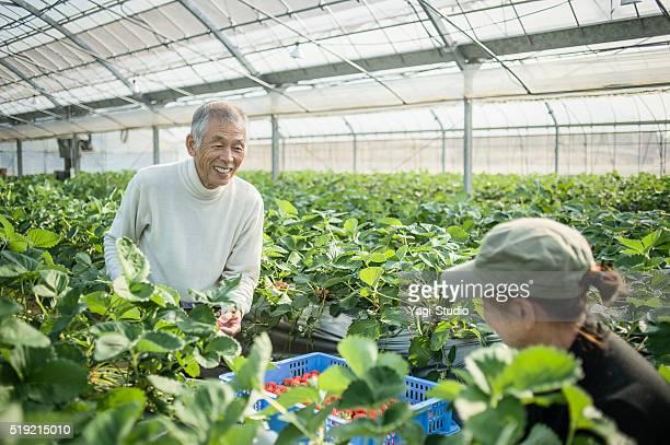 シニア農家動作の温室