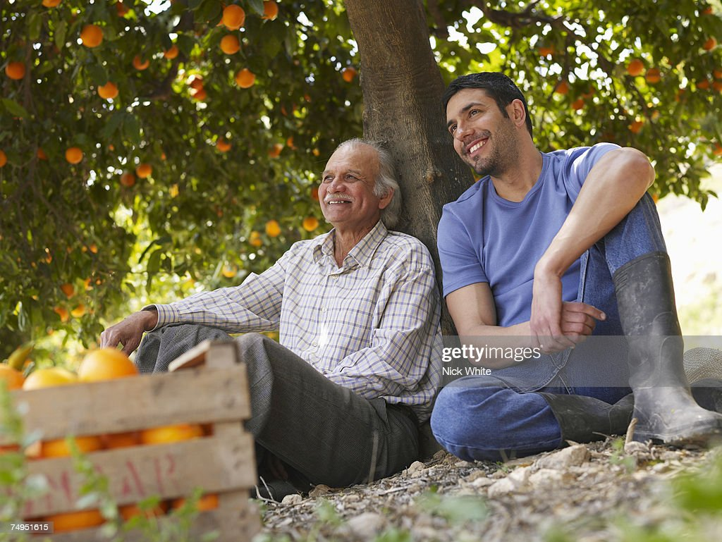 Senior father and son sitting in orange orchard, smiling : Stock Photo